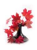 Upon bouquet dawn. Bouquet of autumn red maple leaves in black vase on white background Stock Photos