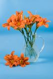 Bouquet of day-lily flowers Stock Photos