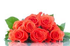 Bouquet de belles roses rouges Photographie stock libre de droits
