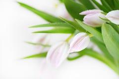 Bouquet de belles, sensibles, belles couleurs des tulipes Image stock