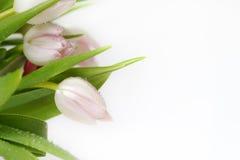 Bouquet de belles, sensibles, belles couleurs des tulipes Photos libres de droits