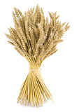 Bouquet de blé Photographie stock libre de droits
