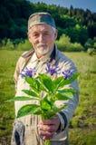 Bouquet de bleuet dans la main de l'homme supérieur de sourire Images libres de droits
