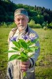 Bouquet de bleuet dans la main de l'homme supérieur de sourire Photo libre de droits