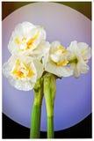 Bouquet de cadeau de couleurs douces pour des femmes Photographie stock libre de droits