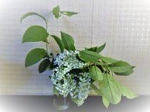 Bouquet de cerise d'oiseau image libre de droits