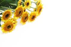 Bouquet de chrysanthème à un arrière-plan blanc Photo stock