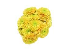 Bouquet de chrysanthème à un arrière-plan blanc Photographie stock