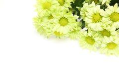 Bouquet de chrysanthème à un arrière-plan blanc Photographie stock libre de droits