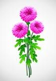 Bouquet de chrysanthemum rouge de fleur Illustration Libre de Droits