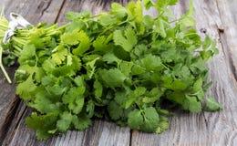 Bouquet de coriandre ou de cilantro image libre de droits