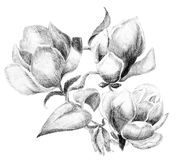 Bouquet de croquis de fleur Photographie stock