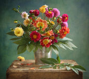 Bouquet de dahlia Images libres de droits