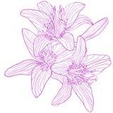 Bouquet de dessin graphique des lis Photos stock