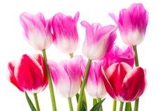 Bouquet de différentes tulipes de couleur Image stock