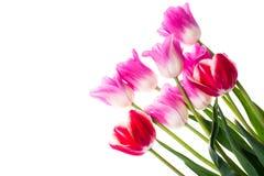 Bouquet de différentes tulipes de couleur Images stock