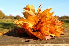 Bouquet de feuille d'érable Image stock
