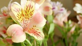 Bouquet de fleur avec le beau Lilium rose clips vidéos
