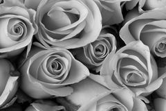 Bouquet de fleur de Rose, couleur noire et blanche Photos stock