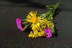 Bouquet de fleurs sauvages de champ photos stock