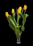 Bouquet de fosteriana de Tulipa de tulipes sur un fond foncé Photographie stock
