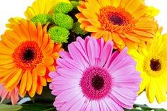Bouquet de Gerber Images libres de droits