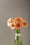 Bouquet de Gerbera dans le vase en verre photo stock