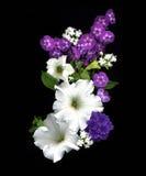 Bouquet de Leslies Photo libre de droits