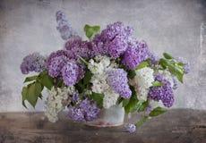 Bouquet de lilas Photo libre de droits