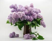 Bouquet de lilas sur un fond blanc Photo stock