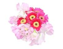 Bouquet de marguerite et de sweetpea du Transvaal à un arrière-plan blanc Photographie stock libre de droits
