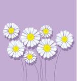 Bouquet de marguerite sur la couleur violette en pastel Image stock