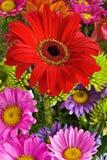 Bouquet de marguerites Image libre de droits