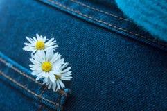 Bouquet de marguerites dans la poche de blues-jean de la femme Image libre de droits