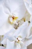bouquet de mariage avec l'orchidée Images libres de droits