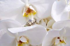 bouquet de mariage avec l'orchidée Photographie stock