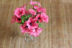 Bouquet de pétunia Photo stock