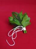 Bouquet de persil Image stock