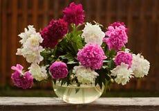 Bouquet de pivoine Image libre de droits