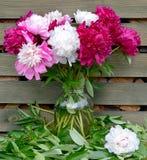 Bouquet de pivoines Image libre de droits