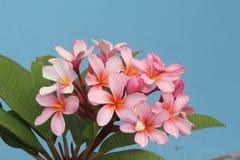 Bouquet de Plumeria avec le ciel bleu Photos libres de droits