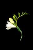 Bouquet de Posy photographie stock libre de droits