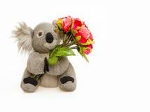 Bouquet de prise de poupée de koala des roses rouges sur le fond blanc Images libres de droits