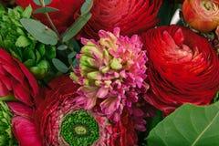 Bouquet de Ranunkulyus des fleurs rouges sur un fond blanc Image stock