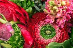 Bouquet de Ranunkulyus des fleurs rouges sur un fond blanc Photo stock