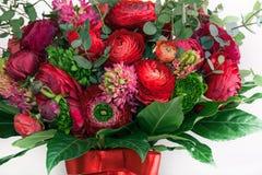 Bouquet de Ranunkulyus des fleurs rouges sur un fond blanc Images stock