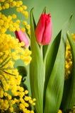 Bouquet de ressort avec la tulipe et la mimosa photographie stock