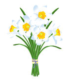 Bouquet de ressort des jonquilles blanches illustration de vecteur