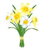 Bouquet de ressort des jonquilles jaunes et blanches illustration de vecteur