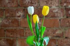 Bouquet de ressort des tulipes sur le fond rouge de mur de briques Photographie stock libre de droits